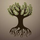 Ukorzeniony drzewo Fotografia Royalty Free