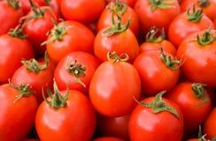 ukradzeni tło pomidory Obraz Stock