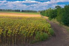 Ukraiński rolniczy krajobraz Fotografia Royalty Free