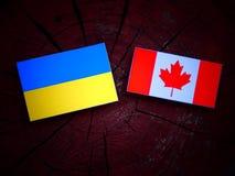 Ukraina flaga z kanadyjczyk flaga na drzewnym fiszorku odizolowywającym obraz stock