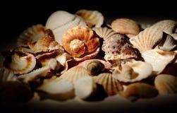 Ukraina, Kijów Skorupy denne skorupy i shellfish Obraz Royalty Free