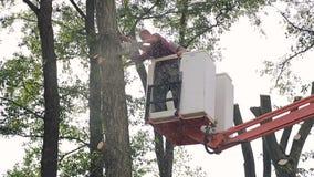 Ukraina Lviv 19 2018 Wrzesień: Ciąć w dół drzewa Pracownik z piłą łańcuchową ciie puszek spada drzewo Promienie zbiory wideo
