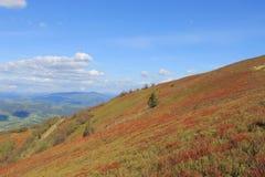 Ukrainare Carpathians Royaltyfria Bilder