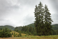 Ukrainare Carpathians efter ett varmt sommarregn Fotografering för Bildbyråer