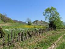 Ukrainare Carpathians på våren arkivfoto