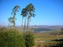 ukraine övre sikt för carpathian berg Royaltyfria Bilder