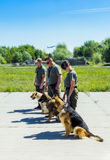 Ukraine, Borispol - MAY 22 : Dog Service Boryspil International Airport on May 22, 2015 in Borispol, Ukraine Royalty Free Stock Photo