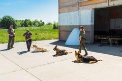 Ukraine, Borispol - MAY 22 : Dog Service Boryspil International Airport on May 22, 2015 in Borispol, Ukraine Stock Photography