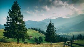 ukraine carpathians Dzembronya Arkivbilder