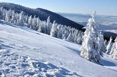 ukraine för dragobratliggandeberg vinter Arkivfoton