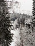 ukraine för dragobratliggandeberg vinter Arkivbild