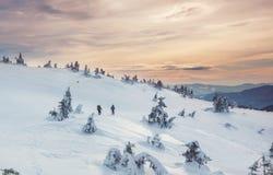 ukraine för sun för strålar för stående för crimea aftonvandring vinter arkivfoton