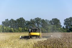 Combine-harvester in a field harvests a sunflower crop for making oil and using it in the food industry. In Ukraine, in the fall, a combine in a field harvests a royalty free stock photos