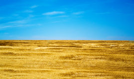 Ukraine Flag. Blue-yellow flag, in nature stock images