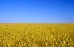 Ukraine flag. Wheat field, flag of Ukraine Royalty Free Stock Images
