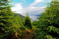 ukraine karpaty krajobrazowa halna dolina Obraz Stock