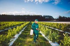 Ukraine, Kiev region June 2, 2017: Agricultural worker in green uniform spraying pesticides on blueberry fields stock photos