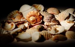 Ukraine, Kiev. Shells of sea shells and shellfish. Shells of sea shellfish. Shells of shellfish corals in a ray of light royalty free stock image