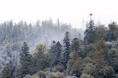 ukraine krajobrazowa halna zima Zdjęcie Stock