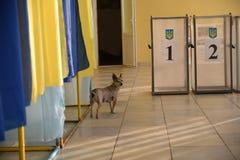 Free Ukraine Local Elections 2020 Royalty Free Stock Photo - 199889835