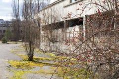 ukraine Tjernobyl uteslutandezon - 2016 03 19 Byggnader i den övergav staden av Pripyat Royaltyfria Bilder
