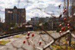 ukraine Tjernobyl uteslutandezon - 2016 03 19 Byggnader i den övergav staden av Pripyat Arkivfoto