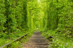 Ukraine. Tunnel of Love. Ukraine. Spring. Railway in the dense deciduous forest. Tunnel Of Love Royalty Free Stock Photo