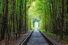 Ukraine, tunnel of lovers Royalty Free Stock Photos