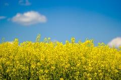 Ukraine Stock Photography