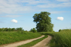 ukrainian ландшафта поля Стоковая Фотография RF