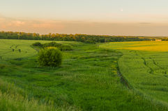 Ukrainian agricultural landscape with full moon Stock Photo