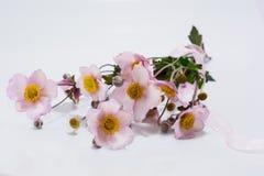 Ukrainian autumn flower Royalty Free Stock Photo