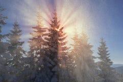 Ukrainian Carpathians snowy forest Royalty Free Stock Photos
