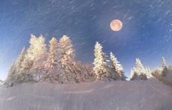 Ukrainian Carpathians snowy forest Royalty Free Stock Photography