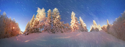 Ukrainian Carpathians snowy forest Stock Image