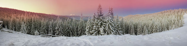 Ukrainian Carpathians snowy forest Stock Photography