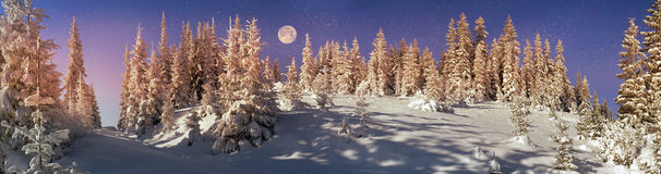 Ukrainian Carpathians snowy forest Stock Images