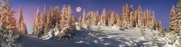 Ukrainian Carpathians snowy forest Stock Images