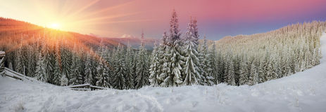 Ukrainian Carpathians snowy forest Royalty Free Stock Image