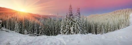 Ukrainian Carpathians snowy forest Royalty Free Stock Image