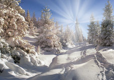 Ukrainian Carpathians snowy forest Stock Photos