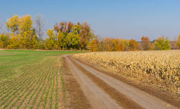 Ukrainian country landscape with two seasonal fields Stock Photography