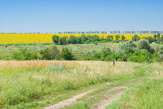 Ukrainian countryside Stock Images