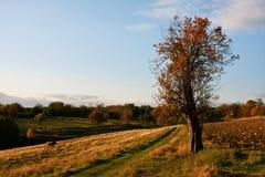 Ukrainian Countryside Landscape Stock Images