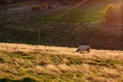 Ukrainian Countryside Landscape Stock Photo