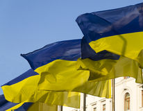 Ukrainian flags Stock Images