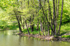 Ukrainian Forest and River Royalty Free Stock Photos