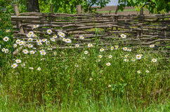 Ukrainian historical identity - wattled fence Stock Photo