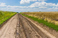 Ukrainian landscape with corn fields and road Stock Photos