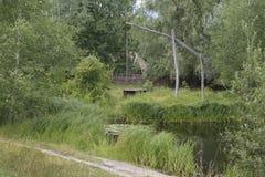Ukrainian landscape with a lake Stock Photography
